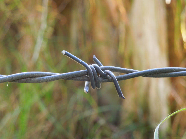 The barb on barbed wire with a background of grass out of focus