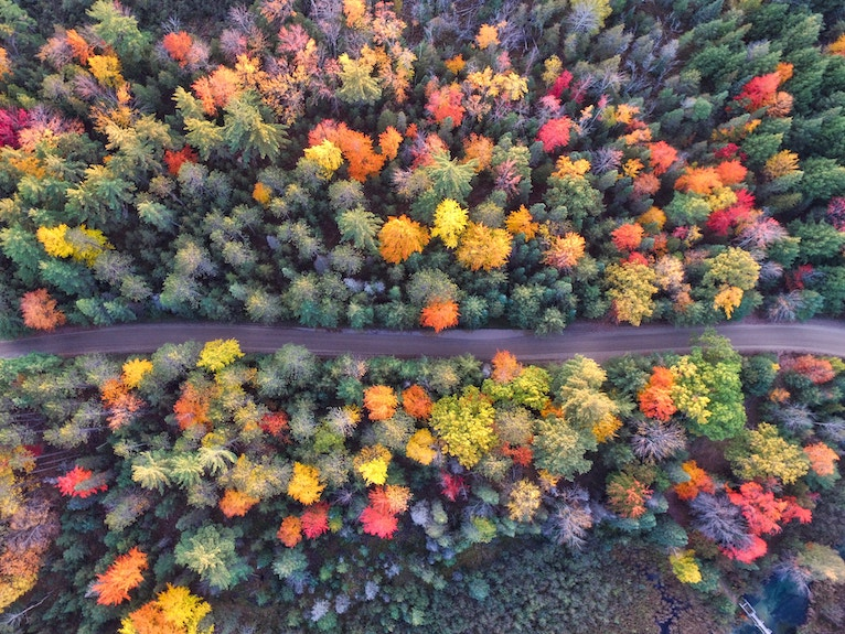 Self-care for fall image: a road winds between trees in fall colors