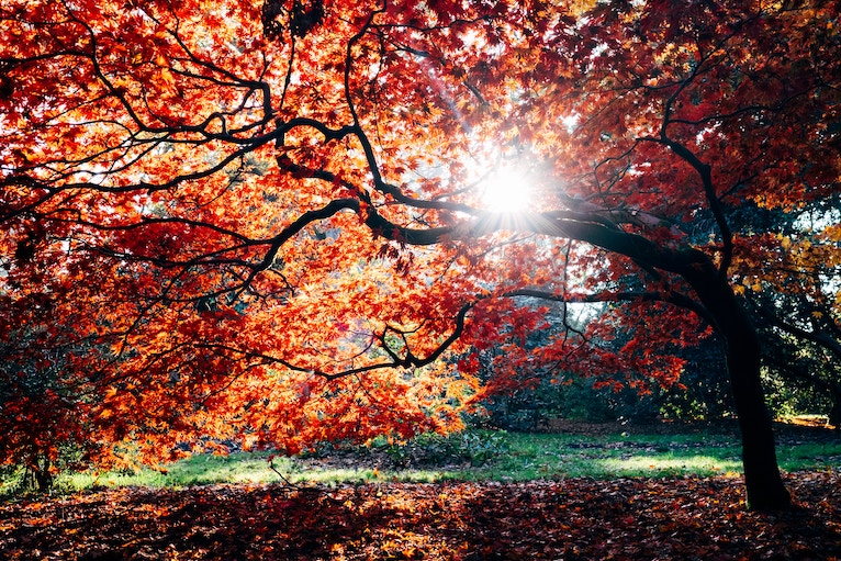 Self-care for fall image: light shines through red fall leaves