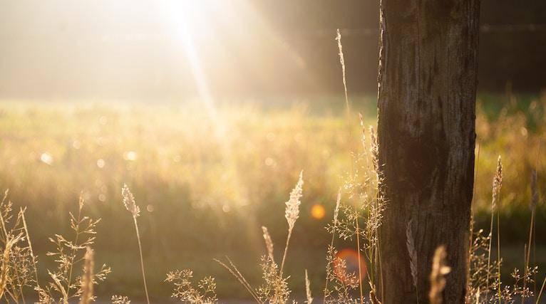 Sunlight shining through grass seed heads