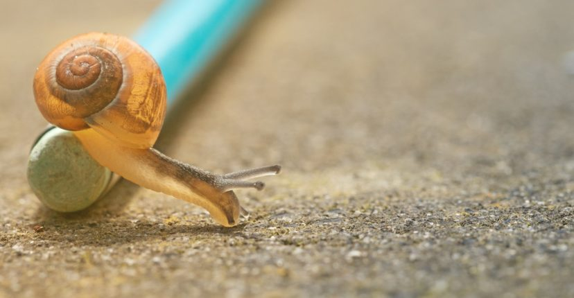 Snail crawling over a pencil