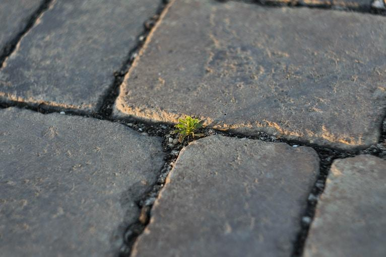 tiny plant growing in cracks between bricks