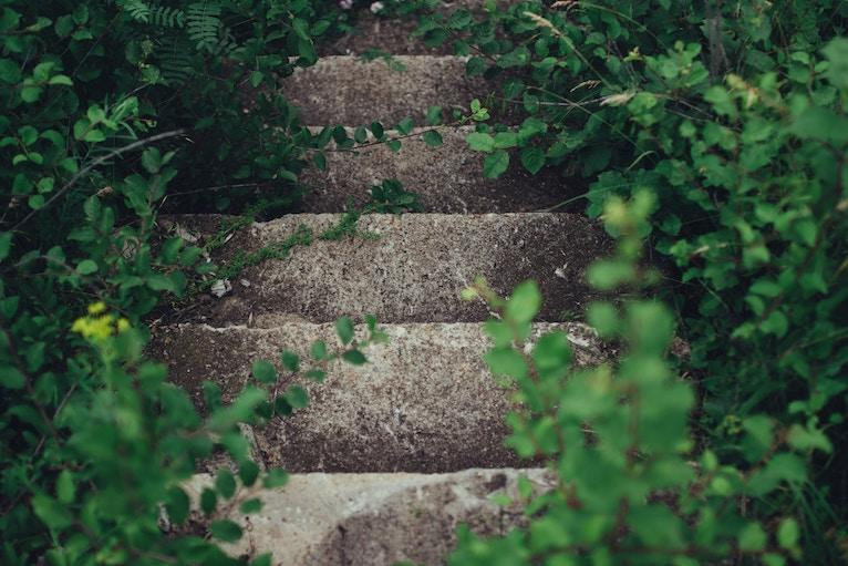 Overgrown concrete stairs