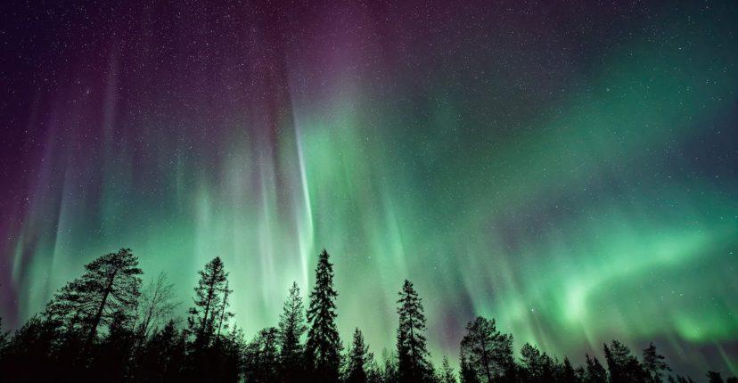 Green aurora above pine trees