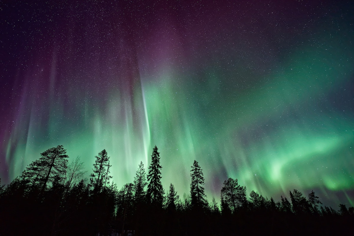 Green aurora above pine trees